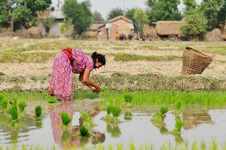 Can climate change ever benefit tropical agriculture?   Climate Change Adaptation in Southeast Asia   Scoop.it