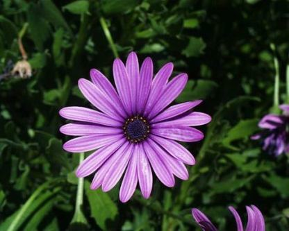 Daisy Flowers Enrich Floral Industry | Agro Products | Scoop.it