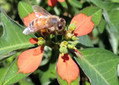 Think about bees before applying pesticides   Northwest News   The Bellingham Herald   Farming, Forests, Water, Fishing and Environment   Scoop.it