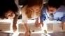 Compétences numériques : un enjeu européen pour l'innovation | TIC en enseignement | Scoop.it