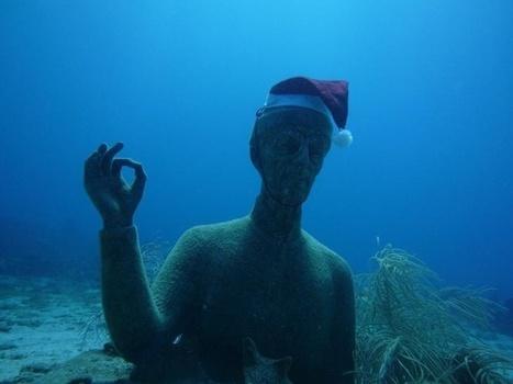 Découvrez la réserve Cousteau, sa faune et flore marine ...   La plongée sous-marine   Scoop.it