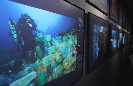 Méditerranée: Les petites îles cachent des trésors de biodiversité | Plongée sous-marine Beuchat | Scoop.it