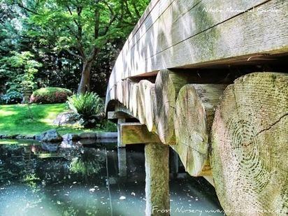 May+19th+UBC+Botanical+Gardens+%26+Nitobe+Memoria+Garden+041.JPG (485x364 pixels) | What's Growing On | Scoop.it