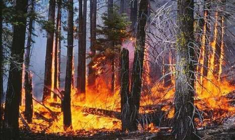 Science and Engineering News - Forest fires in Sierra Nevada driven by past land use | CATWeek 17.11.2016 | Scoop.it