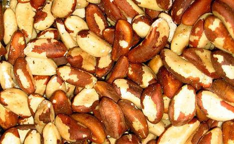Brazil Nuts ( Castanha do Pará ) | Brazilian Beat | Scoop.it