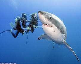 SCUBA SCOOP/latest dive stories: Sharks are not 'man-eaters' | All about water, the oceans, environmental issues | Scoop.it