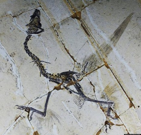 Ancient Birds Had FOUR Wings? | Strange days indeed... | Scoop.it
