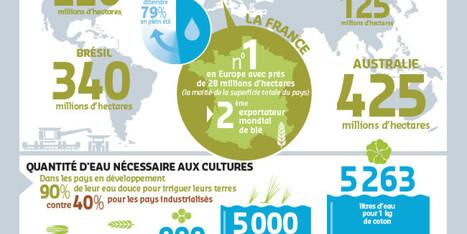 INFOGRAPHIE : eau et agriculture, un défi vital pour le 21e siècle | Eco-Development & Agro-Ecology | Scoop.it