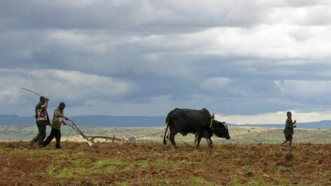 How much agricultural land is China actually grabbing in Africa? - Devex | NGOs in Human Rights, Peace and Development | Scoop.it