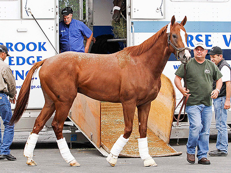 Tapiture's owner expects to test California Chrome in Pennsylvania Derby | Horse Racing News | Scoop.it