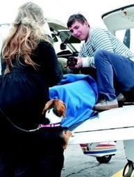 Pilots N Paws: Group takes animal rescue to new heights   Pilots N ...   Animal Shelter voulenteer   Scoop.it