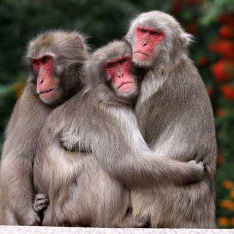 Extending empathy is key to human survival | Non-Equilibrium Social Science | Scoop.it