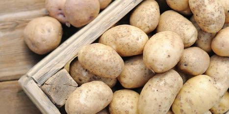 New method to stop potato parasitic worms using fungi - Potato Business | Plant Pathology | Scoop.it