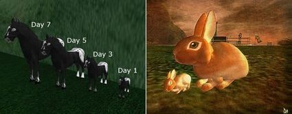 New World Notes: Judge Issues Summary Judgement on Second Life-Based Copyright Dispute Between Virtual Animal Breeders | Second Life and other Virtual Worlds | Scoop.it