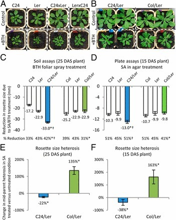 Hormone-regulated defense and stress response networks contribute to heterosis in Arabidopsis F1 hybrids   Plant-Microbe Interaction   Scoop.it