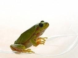 Harcèlement et risques psychosociaux : la grenouille dans la marmite | Osez Oser | Scoop.it