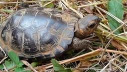 Praise Creation of Wildlife Refuge in Diminishing Bog Habitat   GarryRogers Biosphere News   Scoop.it