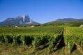 40 ans d'AOC pour les vins de Savoie - France Bleu | Le vin quotidien | Scoop.it