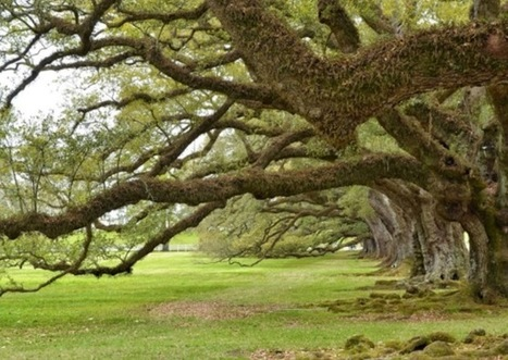 Oak Alley Plantation Announces Spring 2015 Photography Contest | Oak Alley Plantation: Things to see! | Scoop.it