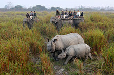 Indian Rhino Poachers Shot Dead   Collateral Websurfing   Scoop.it
