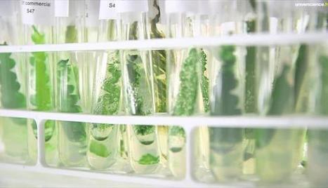 Des algues dans nos moteurs | Algues et énergies | Scoop.it