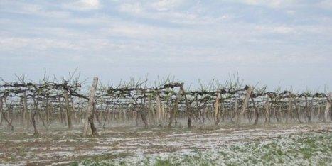 Tempête en Cognaçais : des parcelles de vignes déchiquetées | Actualités du Cognac | Scoop.it