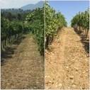 Borgodangelo - aspettando il Taurasi Riserva 2010 - Into the Wine   Into the Wine   Scoop.it