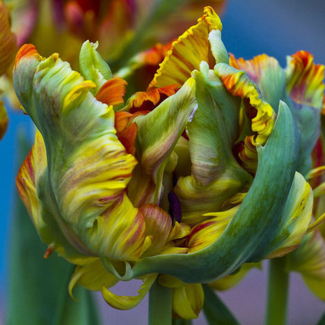 Roberta London's Magnificent Flower Photographs - Manhattan Arts International | Art Career Success | Scoop.it