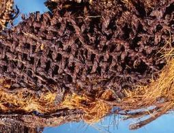 Origin of Egyptian mummies pushed back 2000 years | New Scientist | Kiosque du monde : Afrique | Scoop.it
