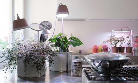 L'orto si fa in casa: 5 utili gadget per coltivare erbe e piante con facilità | Coltivare l'orto | Scoop.it