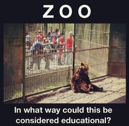 Tweet from @JebBrovsky   zoo's should not exist   Scoop.it