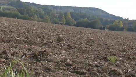 Passage à l'agriculture biologique, pourquoi pas vous? - France 3 Aquitaine | Agriculture biologique | Scoop.it