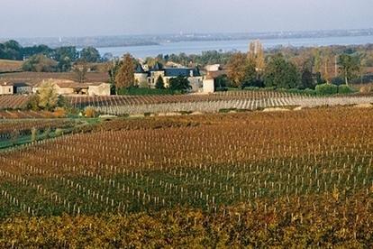 Pour un contrôle des droits de plantation jusqu'en 2030 | Le vin quotidien | Scoop.it