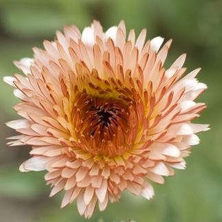 The Best Edible Flowers: Organic Gardening | bedding comforter sets | Scoop.it