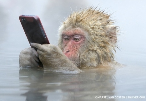 Incredible photo of a Snow Monkey using an iPhone | Creative_me | Scoop.it