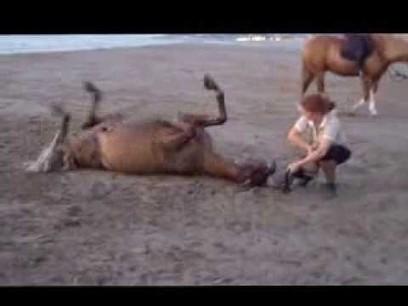 ▶ La Firfol Team à la plage, été 2013 ! - YouTube | éthologie équine | Scoop.it