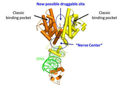 3D structure of HNF-4α reveals new therapeutic opportunities for rare form of inherited diabetes (MODY1) | Amazing Science | Scoop.it