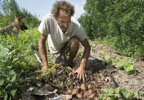 (USA) Un fermier local promeut la hugelkultur, une technique de compostage particulière / Local farmer promotes unique composting technique | Chimie verte et agroécologie | Scoop.it