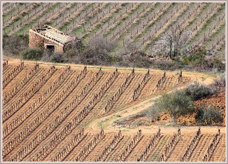 Géométrie viticole | Le Vin et + encore | Scoop.it