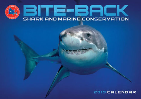 OCEANS TWELVE – 2013 CALENDAR ON SALE NOW - Bite-Back | All about water, the oceans, environmental issues | Scoop.it
