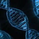 Les traumatismes laissent des traces dans l'ADN | Développement personnel | Scoop.it