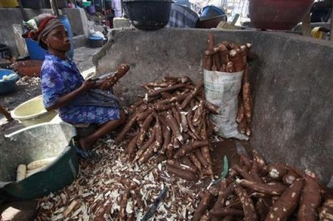 Scientist: Cassava disease spread at alarming rate | Virology and Bioinformatics from Virology.ca | Scoop.it