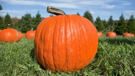 Without us, pumpkins may have gone extinct | Erba Volant - Applied Plant Science | Scoop.it