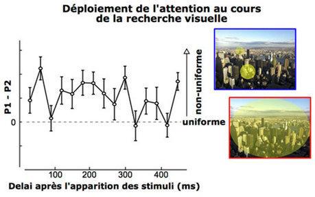CERCO - L'attention recherche de façon non-uniforme dans l'espace et dans le temps | Actualité des laboratoires du CNRS en Midi-Pyrénées | Scoop.it