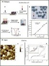 ScienceDirect.com - Trends in Food Science & Technology - Nanomaterials based biosensors for food analysis applications | Nano Food and Packaging debate | Scoop.it