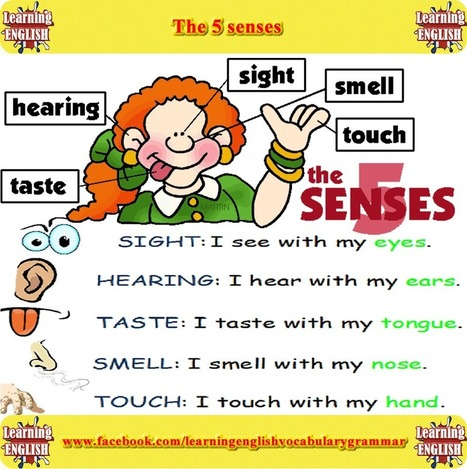 5 senses of the human body English lesson - Learning English with videos and pictures | Learning Basic English, to Advanced Over 700 On-Line Lessons and Exercises Free | Scoop.it