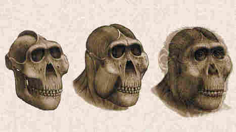 Dental Detectives: What Fossil Teeth Reveal About Ancestral Human Diets | Biology Education Resources | Scoop.it