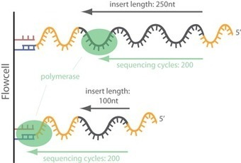 Trimming adapter sequences - is it necessary? | Viruses and Bioinformatics from Virology.uvic.ca | Scoop.it