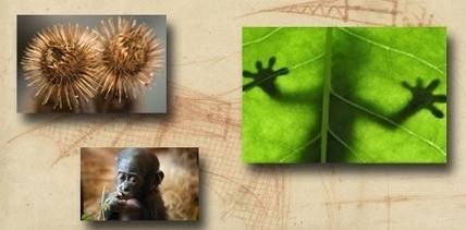 Biomimétisme : du vivant aux technologies   Efficycle   Scoop.it