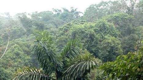 L'Equateur bat un record mondial... de reforestation | Green Attitude | Scoop.it